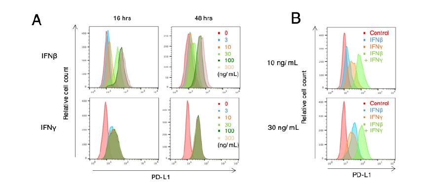 (図)マウス肺がん細胞をIFNβ やIFNγ で刺激すると、細胞表面のPD-L1の発現が上昇する。