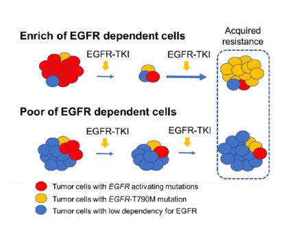 (図)EGFRの依存度の違いによるEGFR-TKIの効果や耐性機序に関する仮説